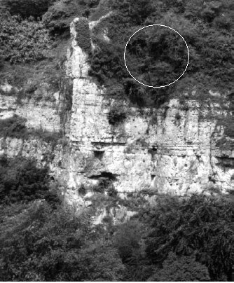 Above: The circle shows the area where the aircraft part was found above the scrappy corner of Truffle.